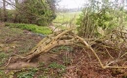 Trädskulptur, nr Crookham Northumerland, England UK Arkivfoto