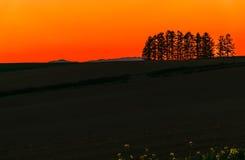 Trädsolnedgångkontur Biei Hokkaido Japan Arkivbild