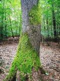Trädstam arkivfoton