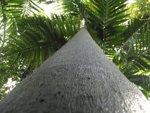Trädstam Fotografering för Bildbyråer