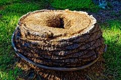 Trädstam av för snitt en palmträd ner med ett hål i det Royaltyfria Foton