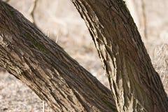 Trädstam i en solig dag Royaltyfri Fotografi