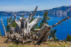 Trädstam i krater sjönationalpark Royaltyfri Fotografi