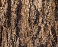 Trädstam i parkera Arkivbild