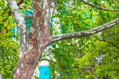 Trädstam i staden av San Jose arkivbilder