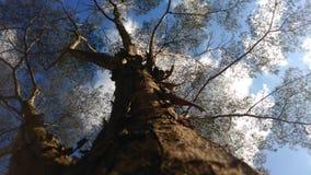 Trädstam med blå himmel och några filialer arkivfoto