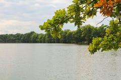 Trädstam med bruna nedgångsidor med dammet, tjeckiskt landskap Arkivbilder