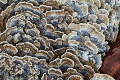 Trädstam med champinjoner royaltyfri fotografi