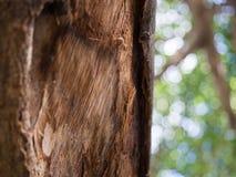 Trädstam med sidor i bakgrunden Arkivbilder