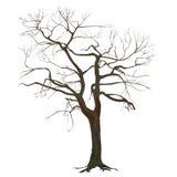 Trädstam med stupade sidor Arkivfoton