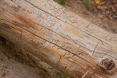 Trädstam med texturerade linjer Arkivfoto
