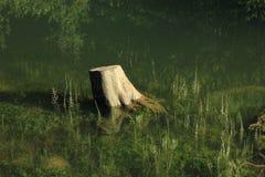 Trädstam och vattenväxter i sjön Obersee Arkivfoto