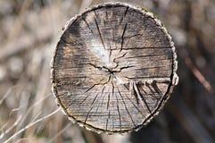 Trädstam - snitt Arkivbild