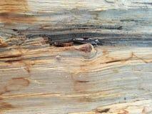 Trädstam som är sönderriven internt i skogen arkivbild