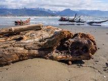 Trädstam som överges längs stranden Royaltyfria Bilder