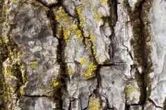 Trädstam som täckas av mu Royaltyfria Foton