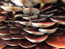 Trädstam som täckas med champinjoner Arkivbilder