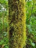 Trädstam som täckas med mossa Fotografering för Bildbyråer