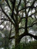 Trädstam som täckas med mossa Royaltyfri Fotografi