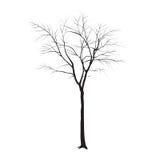 Trädstam utan sidor Royaltyfri Fotografi