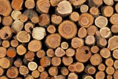 Trädstam vikt beautifully Arkivbilder