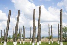 Trädstammar Fotografering för Bildbyråer