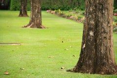 Trädstammar Royaltyfria Bilder