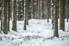 Trädstammar Arkivfoto