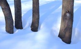 Trädstammar i snö Arkivbilder