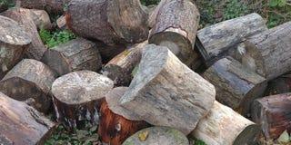 Trädstammar i träna royaltyfria foton