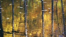 Trädstammar som reflekterar i vatten arkivfilmer