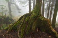 Trädstammen och rotar Royaltyfri Bild