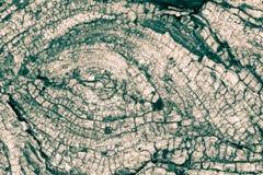 Trädstammen ringer B Arkivbild