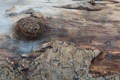Trädstammen täckas delvist med skället arkivfoto