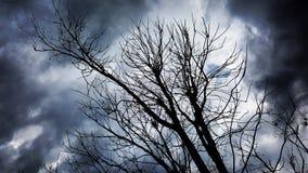Trädstorm Royaltyfria Bilder