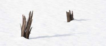 Trädstubbar i det dolda dammet för snö Royaltyfri Fotografi
