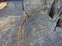Trädstubbe Royaltyfria Bilder