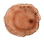 Trädstubbe Arkivbild