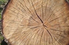 Trädstubbe i skogden träbakgrunden/texturen royaltyfria foton