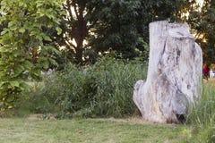 Trädstubbe i trädgård arkivfoton