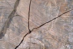 Trädstubbe med modellen Arkivbild