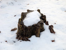 Trädstubbe med is och snö Royaltyfria Bilder