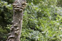 Trädstubbe med svampen royaltyfri fotografi