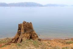 Trädstubbe nära sjön Royaltyfri Fotografi
