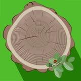 Trädstubbe och fors för grön växt Arkivbild