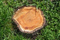 Trädstubbe på det gröna gräset Fotografering för Bildbyråer