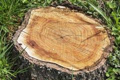 Trädstubbe på det gröna gräset Arkivbilder
