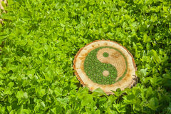 Trädstubbe på gräset med ying av det yang symbolet royaltyfri bild