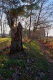 Trädstubbe på solnedgången royaltyfri fotografi