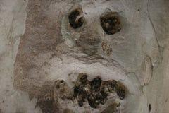Trädstubbe som ser som en man Arkivfoton